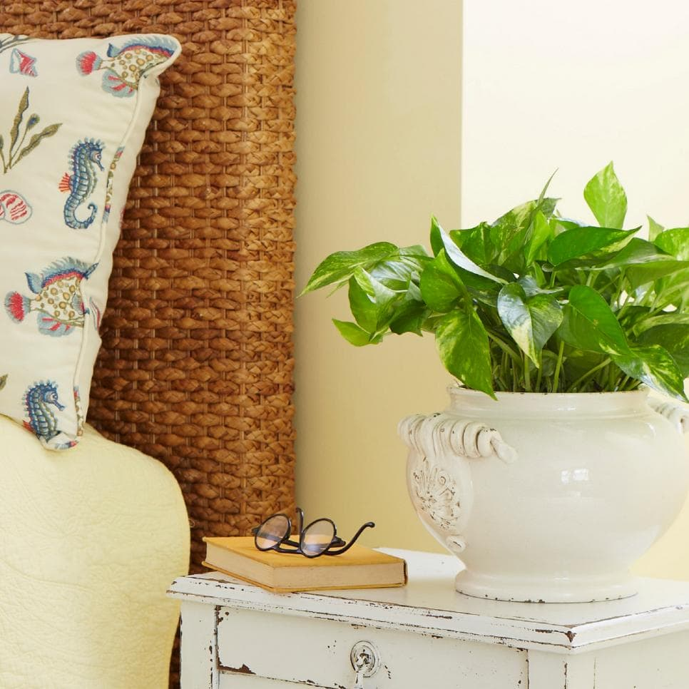 Low Light Houseplants - Pothos